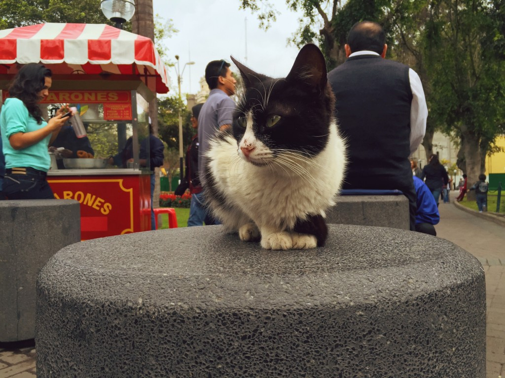 Homeless Cats of Parque Kennedy