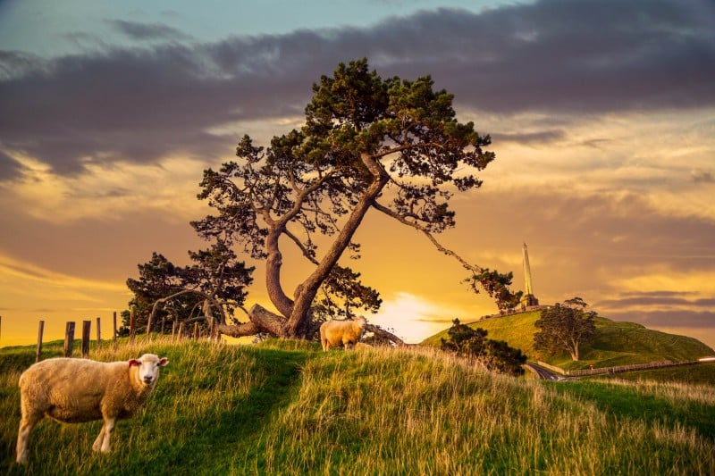 One Tree Hill, Auckland - Global Storybook