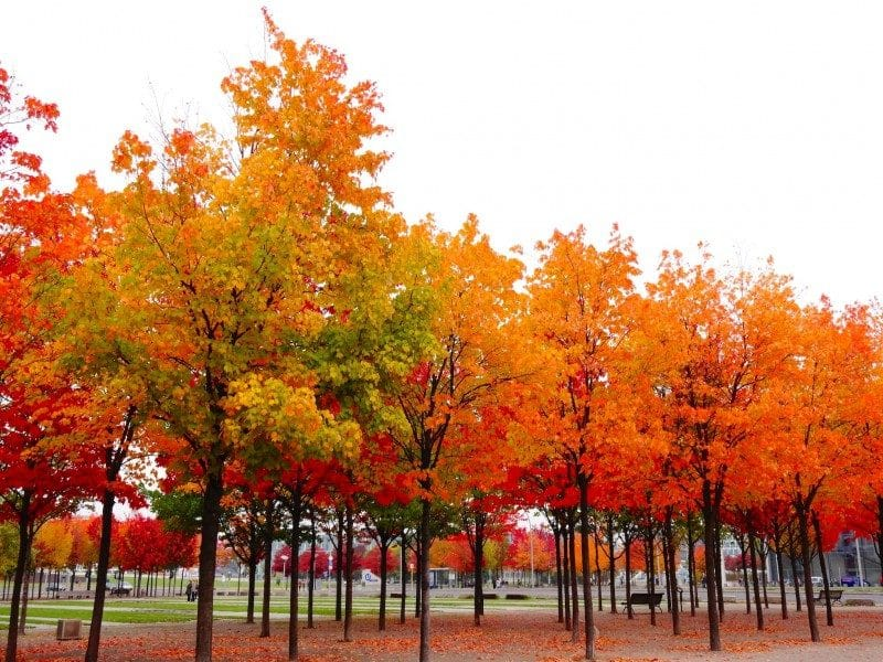 Shades of Autumn in Berlin