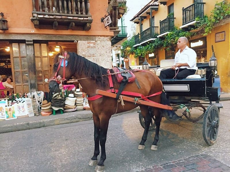 Horse cruelty in Cartagena