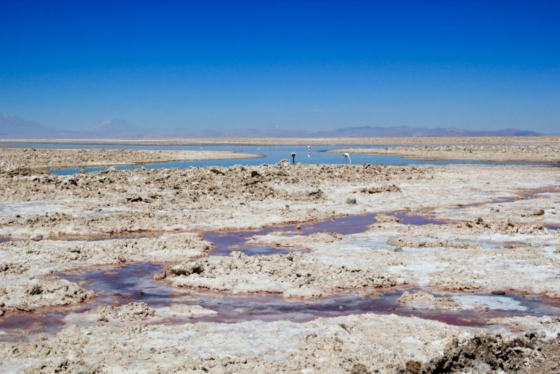 Flamingo Reserve in San Pedro de Atacama, Chile