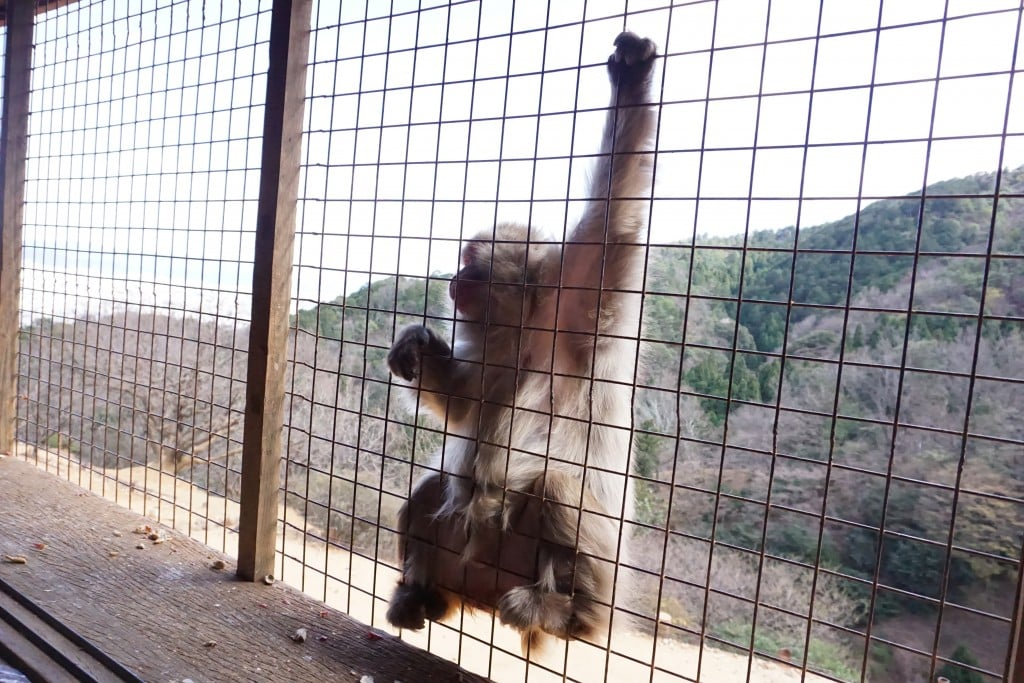 Iwatayama Monkey Park - Global Storybook