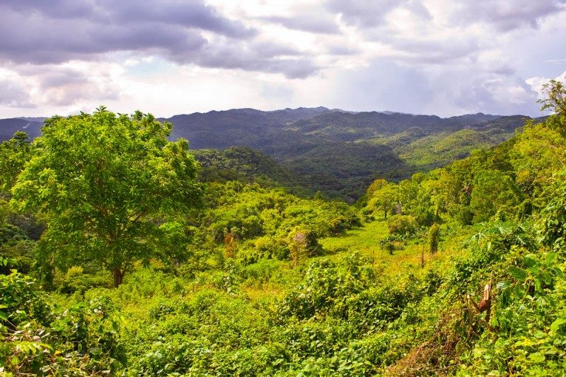 Blue Mountains, Jamaica - Global Storybook
