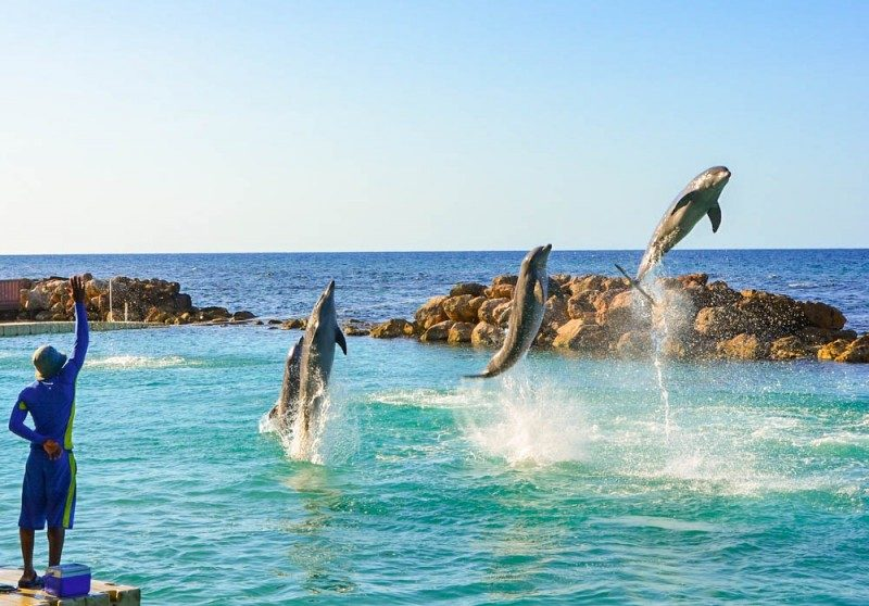 Dolphin Cove Jamaica - Global Storybook